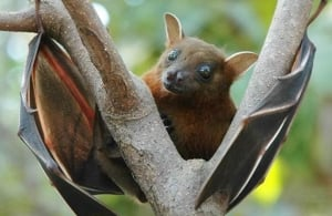 Important things to know about Nipah virus