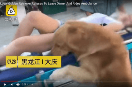 loyal dog refuses to leave collapsed owner